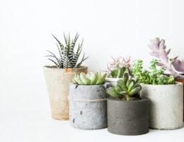 entretenir ses plantes