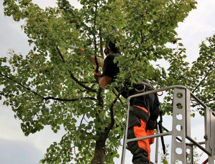 élaguer efficacement vos arbres