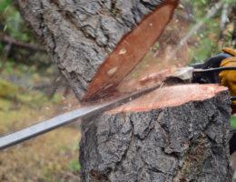 précaution-Abattage-arbre
